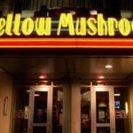 Www.Tellmellow.Com - Mellow Mushroom Survey - Receive $5 Off